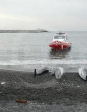 Zonguldak'ta Yunus Balığı Görenleri Şaşkına Çevirdi